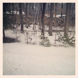 My backyard this morning